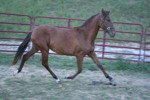 Horses Oct. 11 048